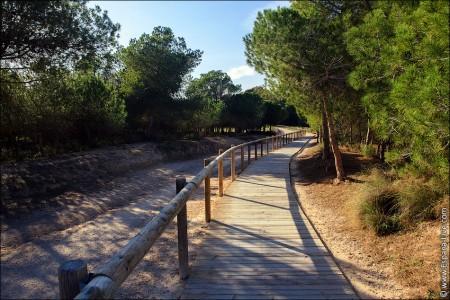Видео и фото http://espana-live.com/park-la-mata.html Испания Торревьеха ла Мата парк